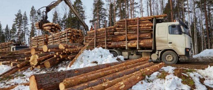 Продаж необробленої деревини